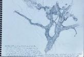 Tree-at-Frog-Lake-pencil