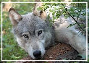 wolfways-2017