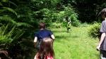 Playing deer/cougar