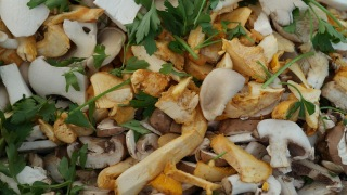 mushrooms-427428_1280