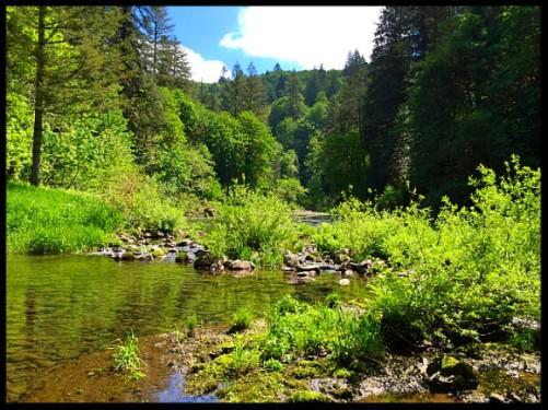 Summer upriver