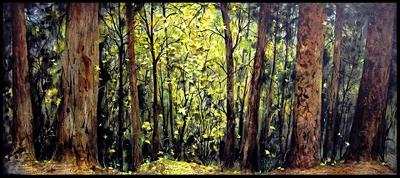 Andie Thrams Forest