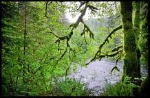 Maple River